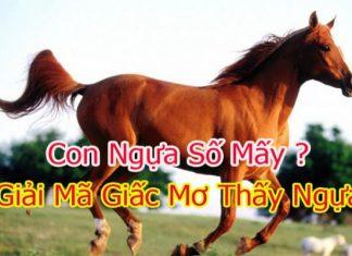 con-ngua-so-may